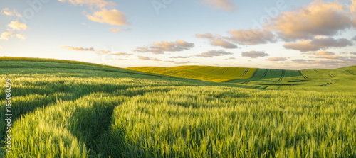 Montage in der Fensternische Landschappen Green, spring field, panorama