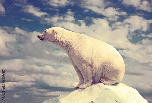 Obrazy na płótnie Canvas polar bear