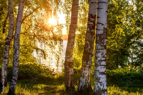 Stickers pour portes Bosquet de bouleaux birch river grove leaves sunset