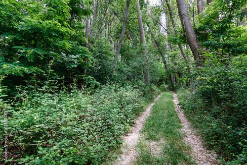 Camino y bosque de chopos. © LFRabanedo