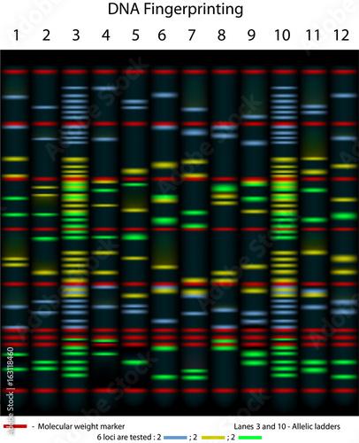 Valokuva  DNA fingerprinting gel