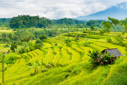 fototapeta na lodówkę Green rice terrace fields in Bali, Indonesia
