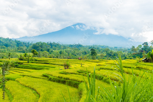Green rice terrace fields in Bali, Indonesia