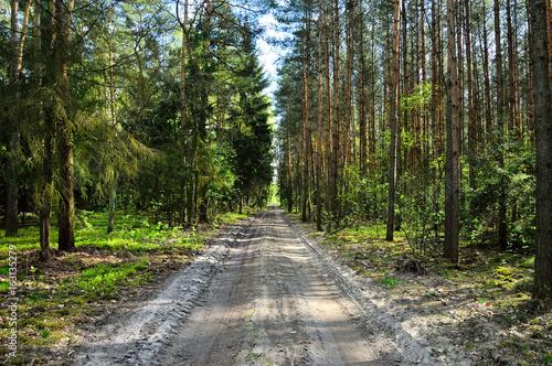 Foto op Canvas Weg in bos Droga w środku lasu