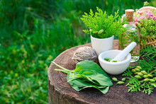 Bottle Of Thuja Infusion, Tincture Or Oil, Mortar And Plantain Leaves. Herbal Medicine.