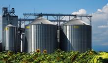 Grain Silos In Front Of A Sunflower Field