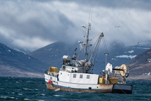 Commercial Fishing Vessel Head...