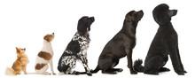 Fünf Hunde Hintereinander Sitzend