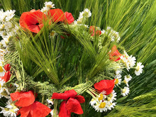 Wreath Of Chamomiles And Poppies.