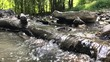 clear mountain stream flowing in the summer forest