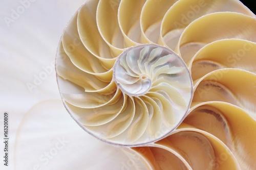 Valokuvatapetti nautilus shell section spiral symmetry Fibonacci half cross golden ratio structu