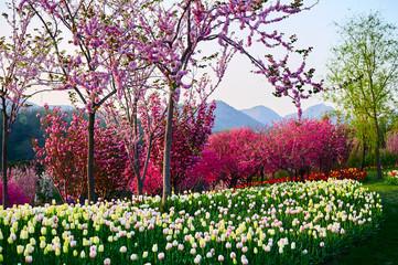 Obraz na Szkle Kwiaty The tulip flower fields scenic