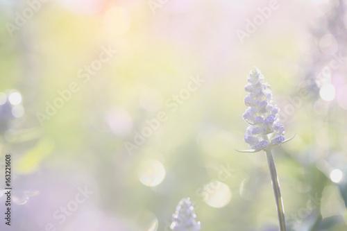 lawendowy-kwiat-w-zakonczeniu-up-z-zielonym-tlem
