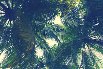 Panel Szklany PodświetlaneTropical palm tree leaf background