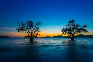 Fototapeta na wymiar Landscape beautiful mangrove tree with a colorful sunset,Phuket,Thailand.