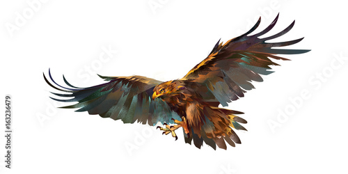 Photo  Drawing flying eagle on white background