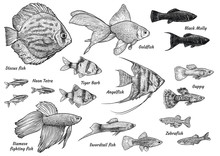 Collection Of Aquarium Fish Illustration, Drawing, Engraving, Ink, Line Art, Vector