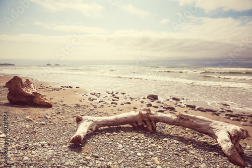 Olympic coast Canvas Print