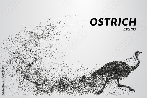 Cuadros en Lienzo Ostrich from the particles