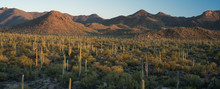 Saguaro Desert Signal Hill Pan...