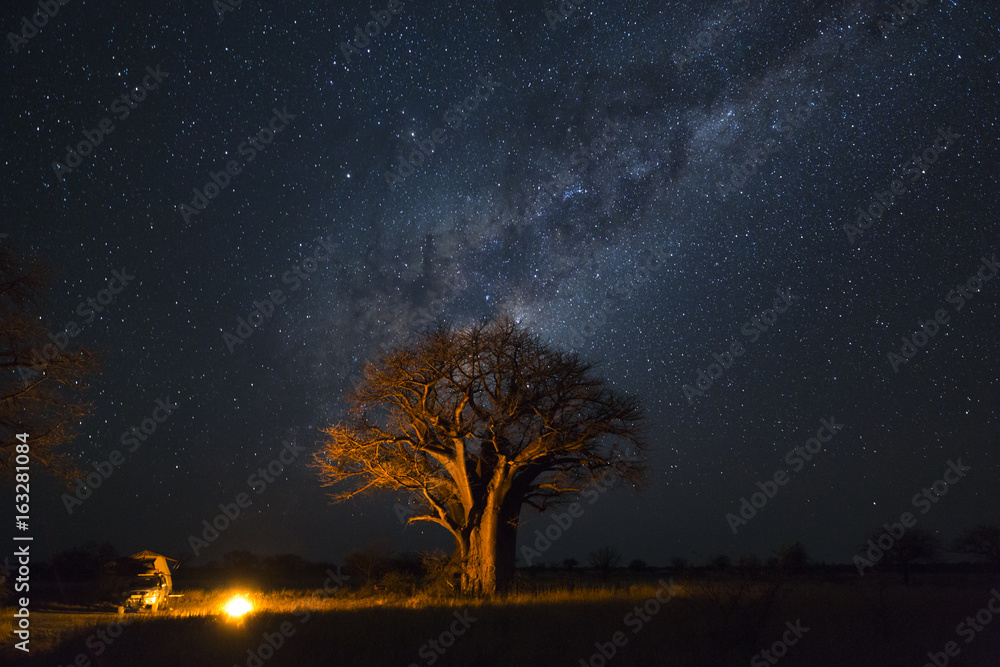 Fototapety, obrazy: Camping under baobab's and milkyway