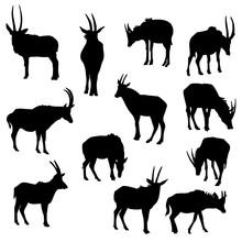 Vector Set Of Antelopes