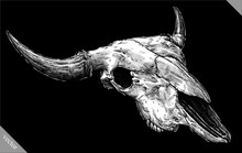 Engrave Isolated Cow Skull Hand Drawn Graphic Vector Illustration
