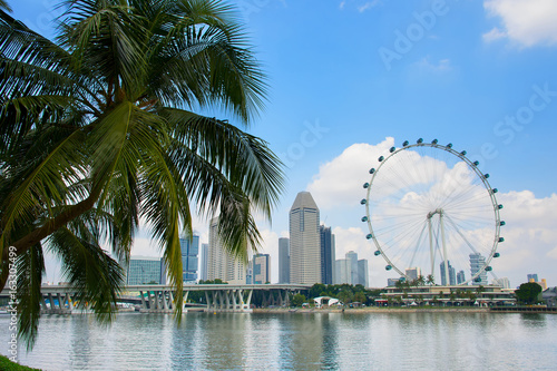 Photo  Singapore Flyer and palm tree