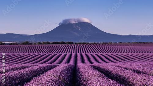 Ingelijste posters Lavendel paysage e lavande à Valensole