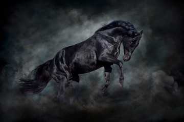 FototapetaBlack stallion in motion against dark dust clubs