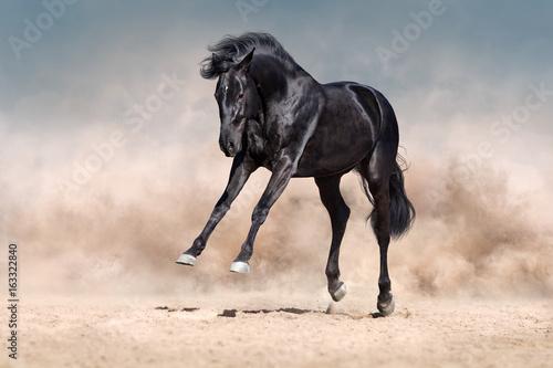 czarny-kon-bawiacy-sie-na-pustyni