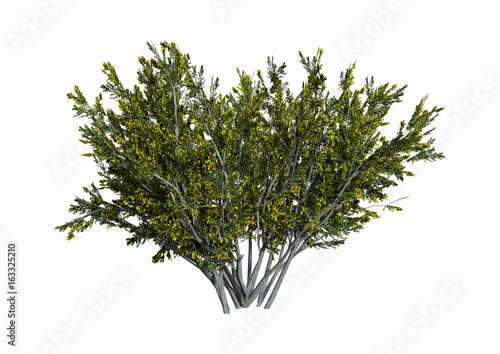 Photo  3D Rendering Creosote Bush on White