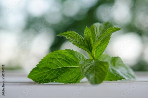 Valokuvatapetti Fresh green mint on white wooden table