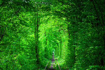 Fototapeta a railway in the spring forest tunnel of love