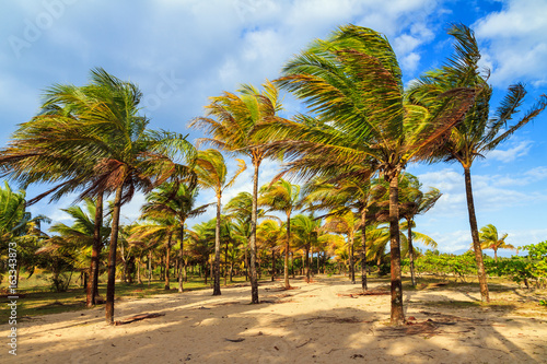 Fototapeta Beautiful summer view on palm trees with sunshine and a blue sky in Madagascar