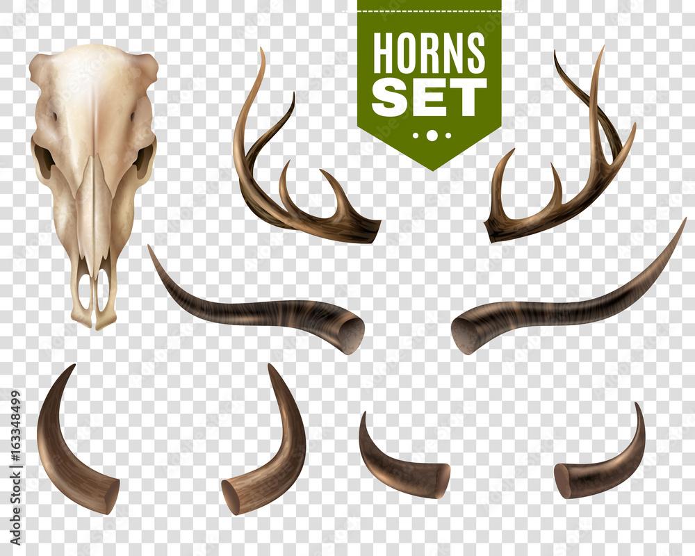 Fototapeta Cow Skull And Horns Set