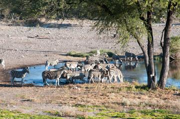 Fototapeta na wymiar Zebras and antelopes at the watering hole