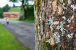 Alter Baum am Straßenrand und unscharfer Motorroller mit Licht