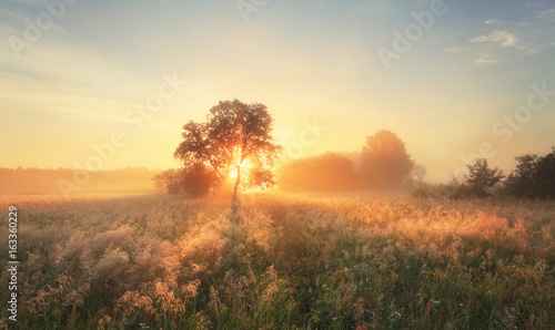 Poster Beige Colorful autumn sunrise on meadow