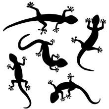 Set Of Lizard, Salamader, Geck...