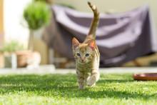 Cute Little Cat On The Grass