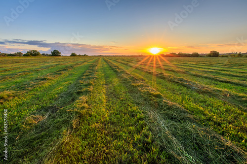 Papiers peints Vignoble Sunset at cultivated land in the countryside on a summer.