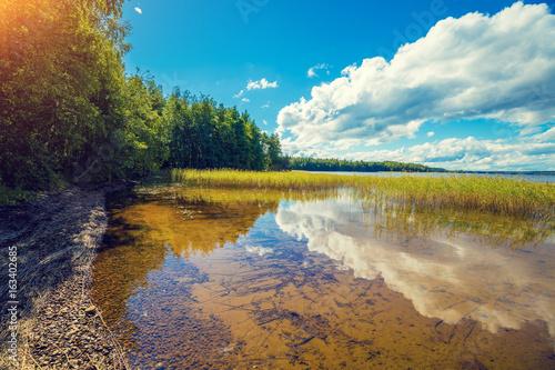 Plakat Lakeshore z drzewami i błękitnym chmurnym niebem. Piękna lato natura Finlandia