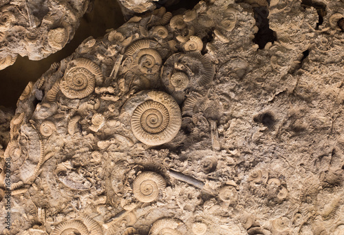 Cuadros en Lienzo Fossils in rock