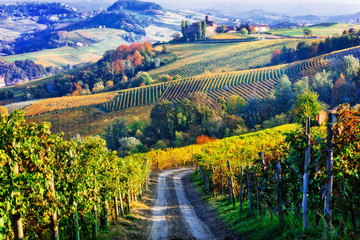Fototapeta Toskania Vineyards and castles of Piemonte in autumn colors. North of Italy