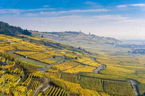 Vineyards at Chateau de Kaysersberg -  alsace in France - travel destination in Canvas Print