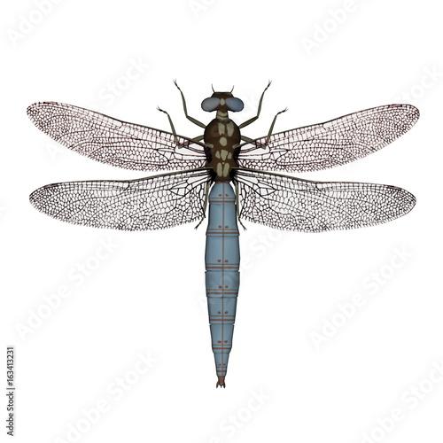 Fotografia, Obraz  Darter dragonfly - 3D render