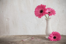 Pink Gerbera On Background Old...