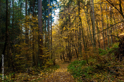 Poster Forest Autumn forest