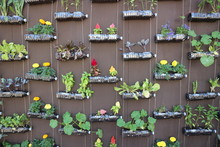 The Idea Of Using Plastic Bottles To Create Vertical Garden.